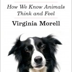 Virginia Morell's fascinating exploration of animal cognition, Animal Wise, now in paperback